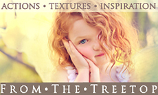 From The Treetop Photographer Resources